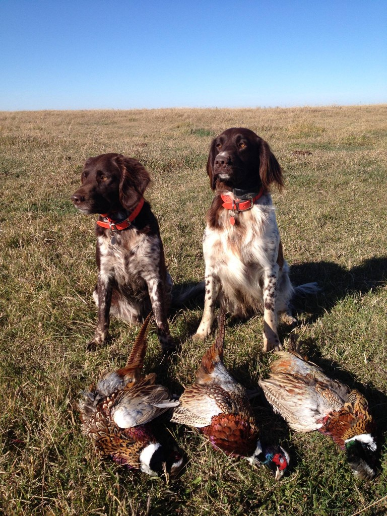 LM with pheasants